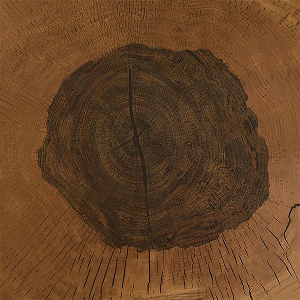Oak log section